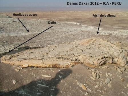 Dakar damages on fossils in Ica www.perucycling.com